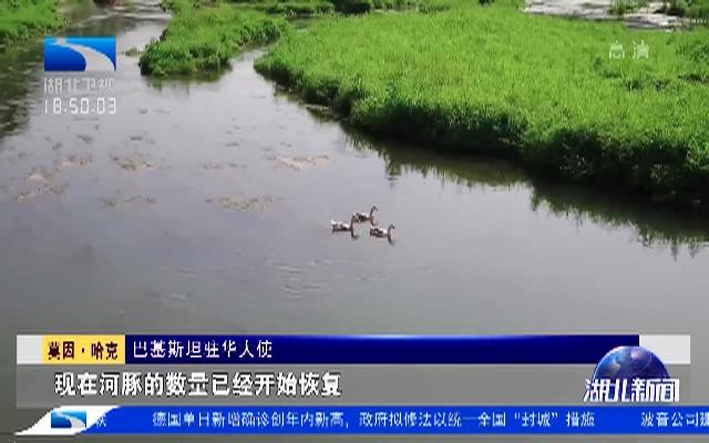 """10000尾中华鲟激起 """"巴铁""""友谊新浪花"""