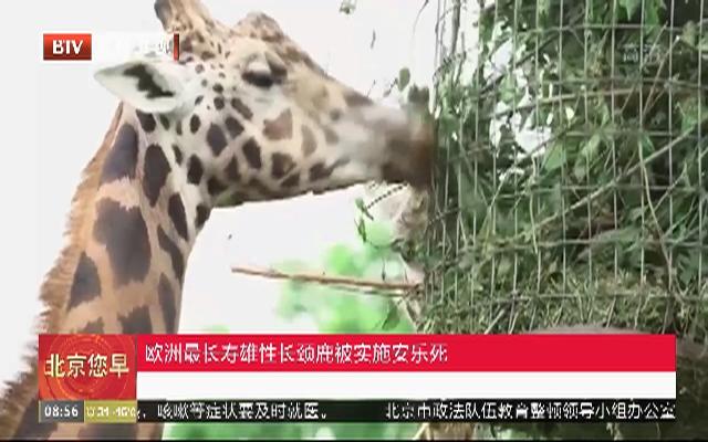 欧洲最长寿雄性长颈鹿被实施安乐死