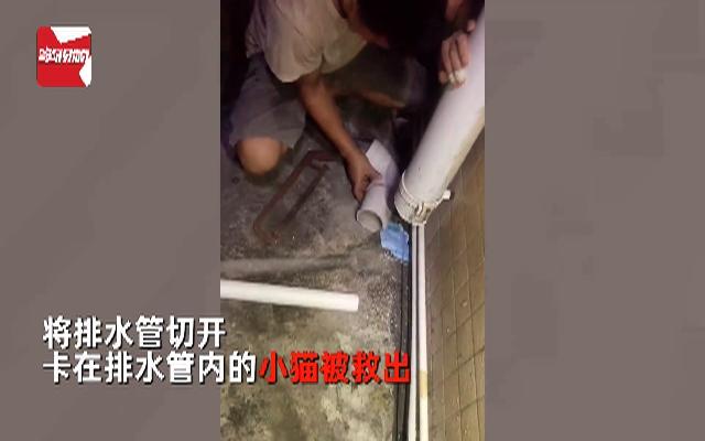 女子家寵物狗突然對隔壁排水管不停叫喚,切開管道后眾人連連尖叫