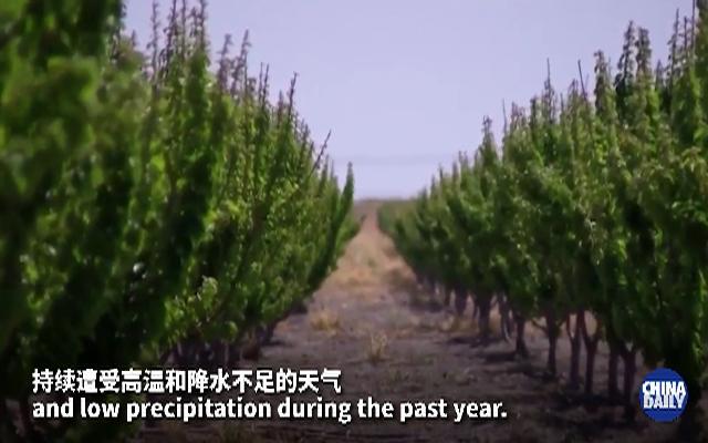 美国加州遭遇近百年来最严重干旱